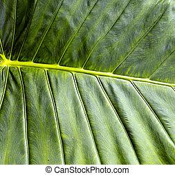 tropicais, folhas, folha, selva, fundo