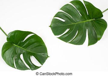 tropicais, folhas