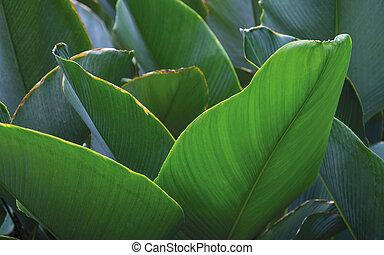 tropicais, folhas, fundo