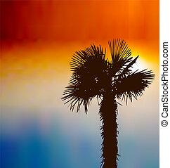 tropicais, fundo, com, árvore palma, em, pôr do sol