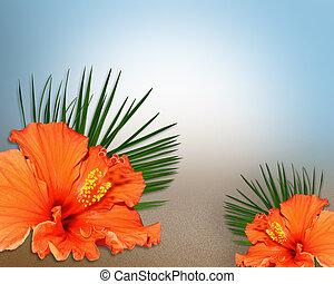 tropicais, hibisco