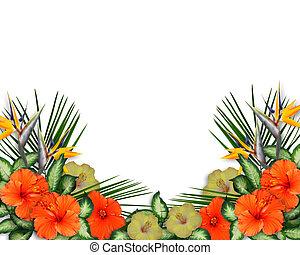 tropicais, hibisco, flores, borda