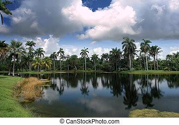 tropicais, jardim botanic