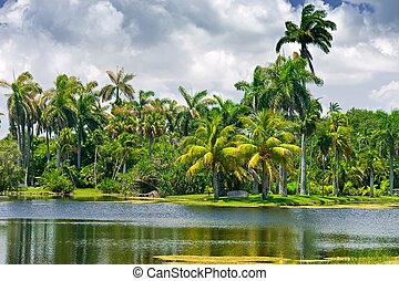 tropicais, jardim botanic, flórida, fairchild