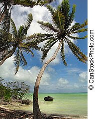 tropicais, lagoa