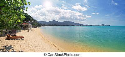 tropicais, longue chaise, praia, mar