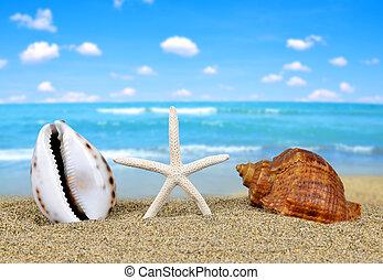 tropicais, mar, starfish, conchas