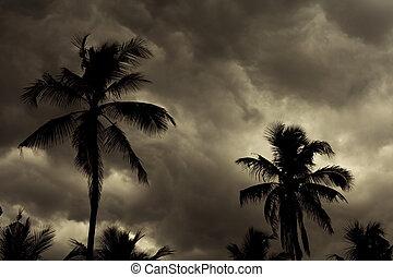 tropicais, monção, skyline