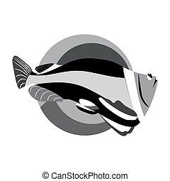 tropicais, monocromático, peixe