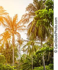 tropicais, oceânicos, selvagem, selva, crescer, coco, ilha, praia, palmas