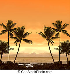 tropicais, pôr do sol
