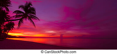 tropicais, pôr do sol, com, árvore palma