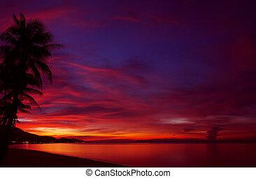 tropicais, pôr do sol, com, árvore palma, silueta