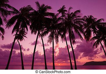 tropicais, pôr do sol, com, coqueiros, silueta, tailandia