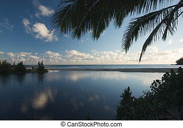 tropicais, pôr do sol, coqueiros