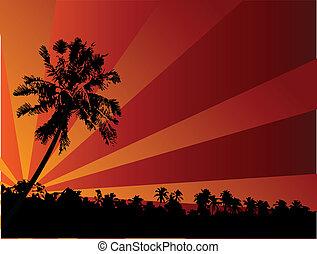 tropicais, pôr do sol, ilustração