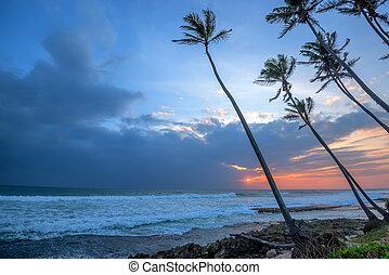 tropicais, pôr do sol, litoral