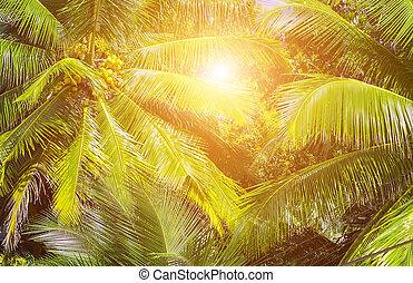 tropicais, palma, árvores verdes