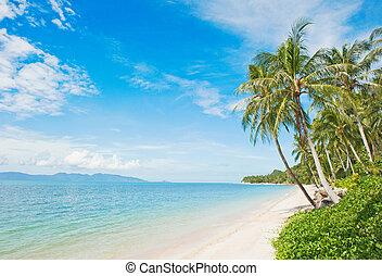 tropicais, palma, coco, praia