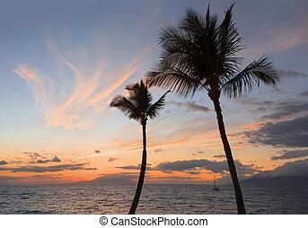 tropicais, palma, silueta, pôr do sol, árvores