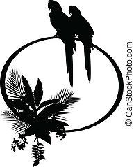 tropicais, silueta, pássaro