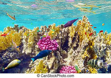 tropicais, submarinas, corais, mundo, fish.