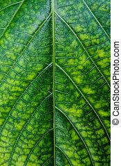 tropicais, verde, concept., folha, natureza