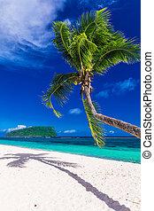 tropicais, vibrante, natural, praia, ligado, samoa, ilha, com, árvore palma