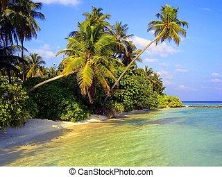tropicais, vista