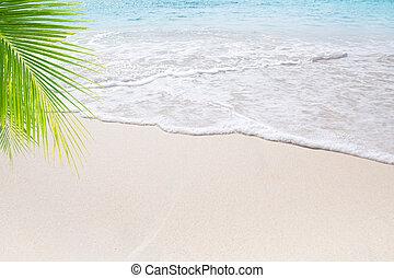 tropicais, vista, praia, agradável