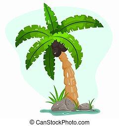 tropical, árbol verde, planta, hojas, caricatura, location., palma, exótico, icono, verano