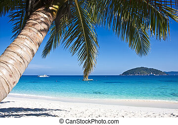 tropical, arena blanca, playa, con, árboles de palma