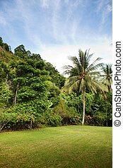 A tropical back yard with grass and palm trees