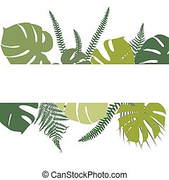 fern and monstera leaves