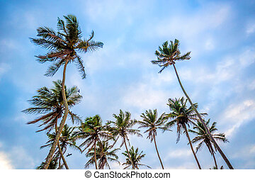 Tropical background with palms and sky