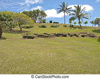 Tropical backyard - expansive lawn with palm trees in Kauai