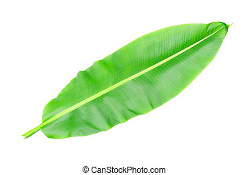 tropical banana leaf texture in garden, abstract green leaf, large palm foliage nature. lar