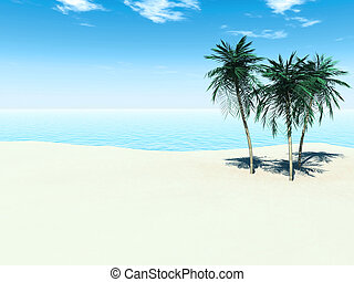 Tropical beach - A sunny tropical beach with three palm...