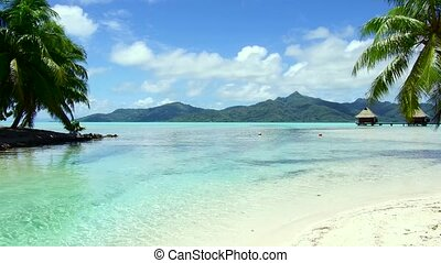 travel, seascape and nature concept - tropical beach with palm trees and bungalows in french polynesia