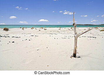 Tropical beach and dead tree