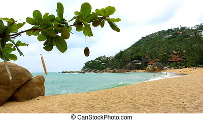 Tropical beach and developing branch in the wind