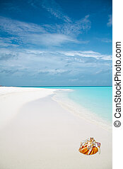 Tropical beach and hermit crab
