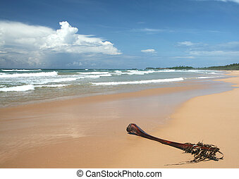 Tropical beach and palm frond - An old palm frond lying on a...