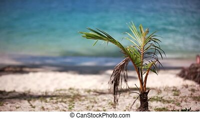 tropical beach and small palm tree. 1920x1080 - tropical...
