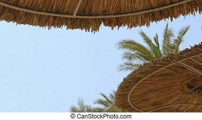Tropical beach and the beach sunshades umbrellas. Tropical...
