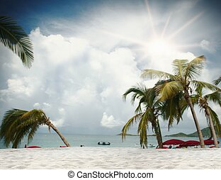 Background of tropical beach with palm trees