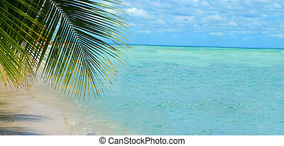 palm tree along the beach of beautiful tropical water and sky great for a backdrop with copy space