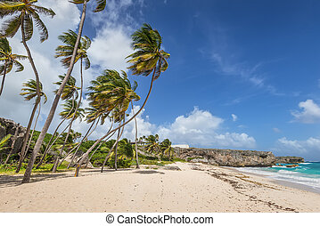 Tropical beach Bottom Bay on the caribbean island Barbados