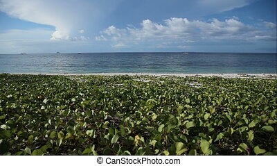 Tropical beach covered with green vegetation