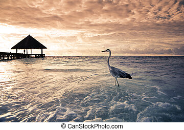 tropical beach: flamingo at the dawn. Dramatic sky